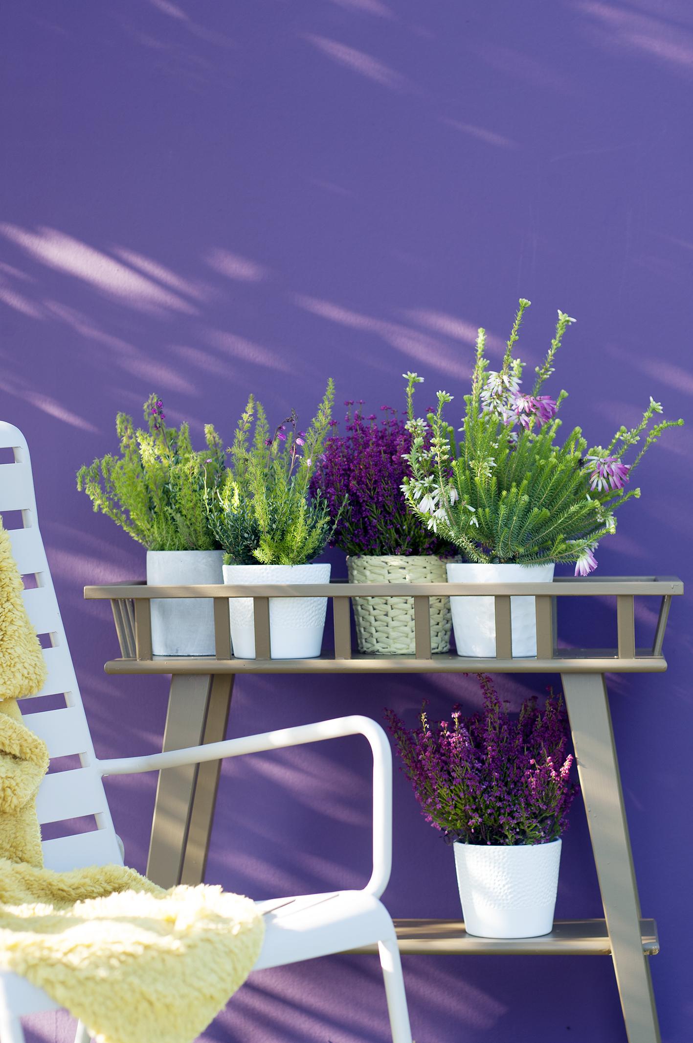 tuinplant-van-de-maand-januari-erica-006-kopie